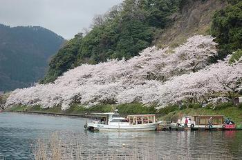 kaizusakura02.JPG