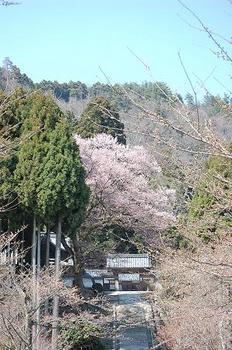 takashimasakura01.JPG