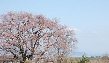 takashimasakura05.JPG
