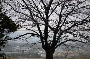 utakosakura.JPG